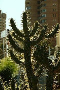 Cactus a contraluz