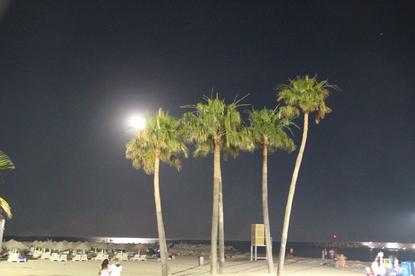 La luna entre las plameras