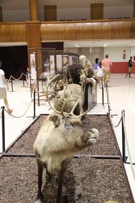 Neandertales con trineos de renos