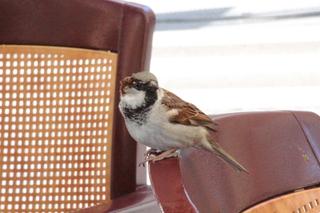 A nuestro lado un pájaro nos miraba, ¿con envidia?