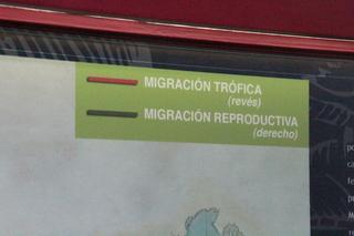 En la exposición permanente están las rutas de las dos migraciones: la trófica y la reproductiva