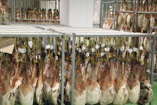 Detalle de los jamones en el secadero. Antes de colgarlos se los ha huntado con aceite de oliva