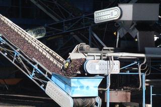 Los camiones llegan, echan las aceitunas en tolvas y una cinta transportadora las sube hasta la fábrica
