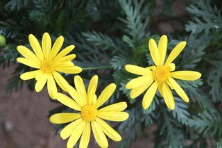 Unas flores de invierno nos saludan