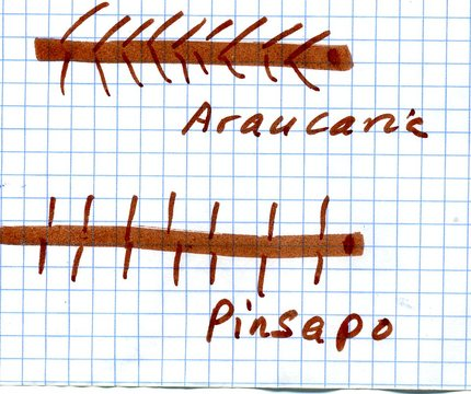 En la araucaria las agujas se inclinan en dirección hacia el borde de crecimuiento. En el isnapo son verticales.