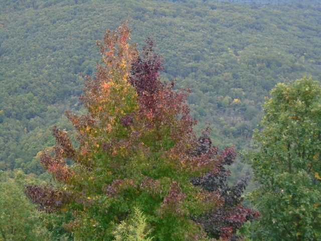Los árboles presentan una enorme paleta que va desde los verdes a los amarillos, ocre e incluso violaceos.