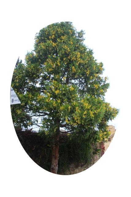 Los árboles, nos dicen, con su lenguaje de colores, que el otoño avanza implacable.