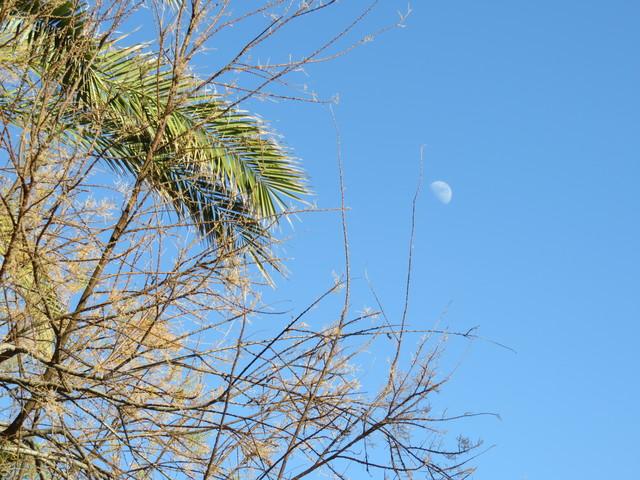 La Luna entre los árboles.