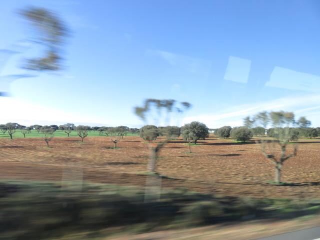 Por el camino, las encinas se nos escapan a toda velocidad. Tanta que no es posibe obtener una foto quita.