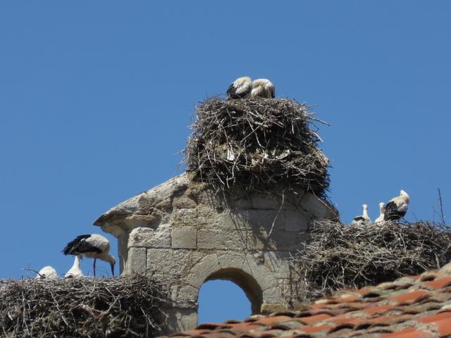 Cigüeñas en el campanario de San Isidoro.