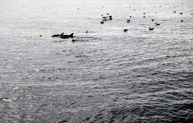 Delfines a la vista