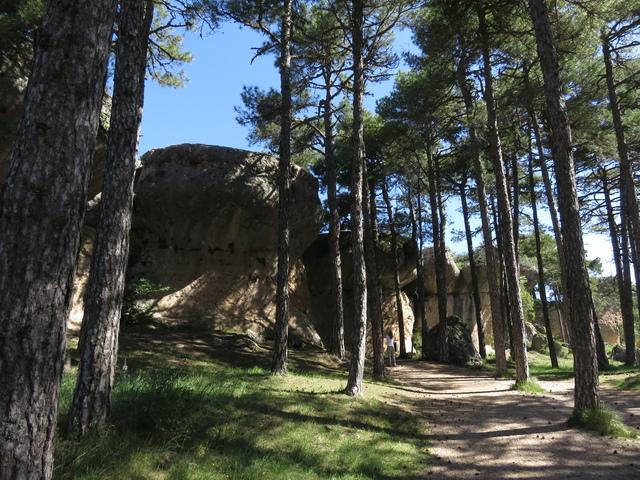Las rocas entre los Pinus nigra