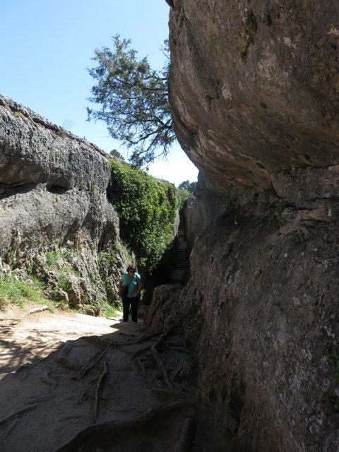 Raíces creciendo en mitad de la roca