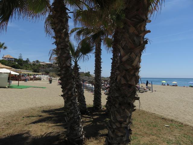 Palmeras en la Playa.