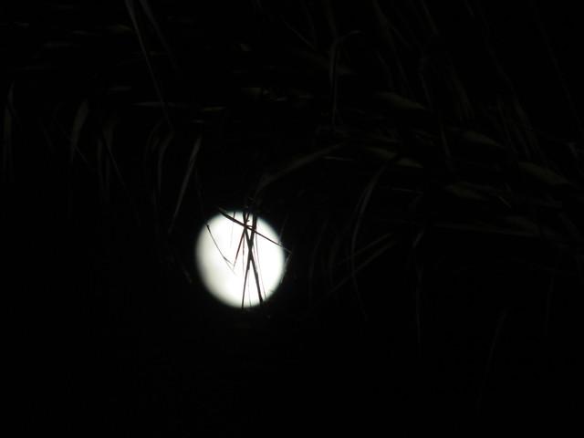La luna entre las palmeras.
