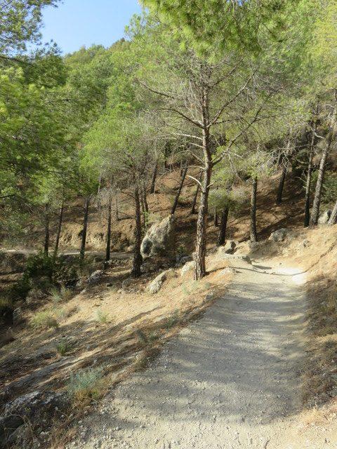 Camino para llegar a la presa del Gaitanejo. Pueden ver que es bastante llano.