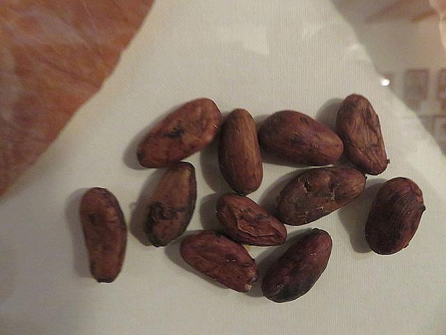 Semillas de cacao.