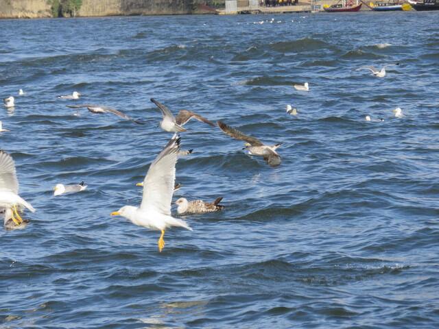 Cuando llegamos a puerto nos saludan las gaviotas.